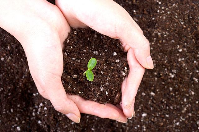 肥料は、与えすぎに注意しましょう